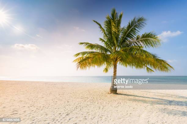 Palm trees and beach. Tropical vacation background concept. Moody sky