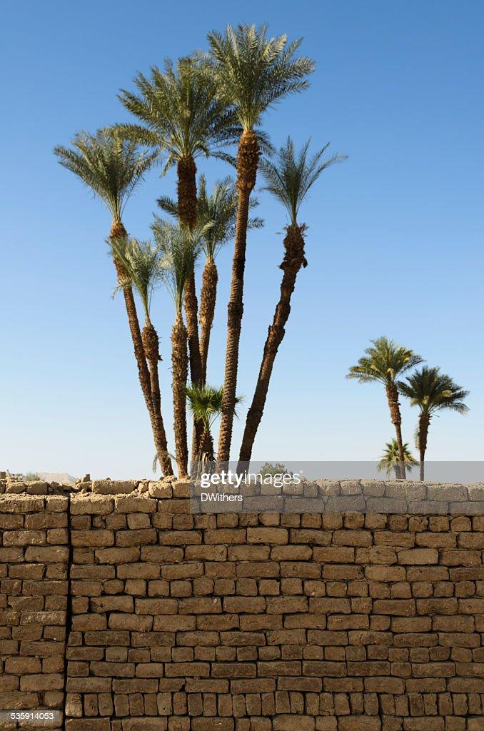 Palmeras y pared de ladrillos : Foto de stock