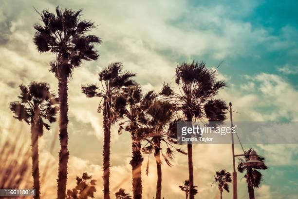 palm trees and clouds - california meridionale foto e immagini stock