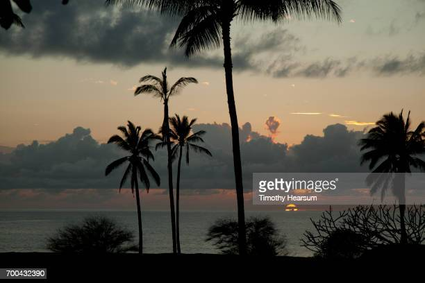 palm trees and clouds, with sun setting into the ocean - timothy hearsum stock pictures, royalty-free photos & images