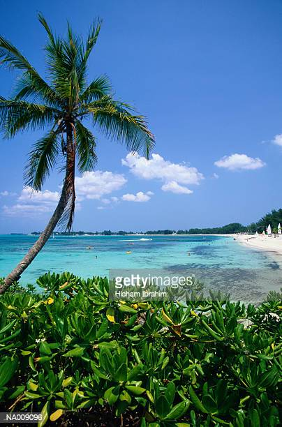 palm trees and coast at nassau - cable beach bahamas stock photos and pictures