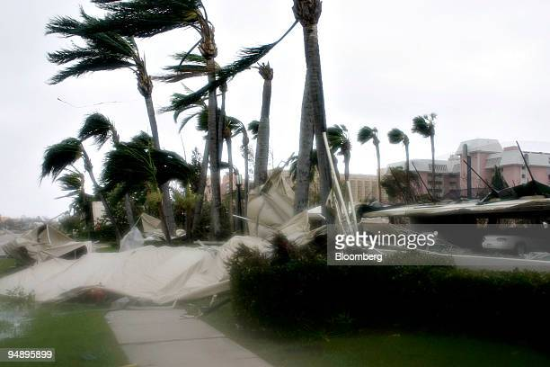 Palm trees and debris are blown as Hurricane Wilma passes through Marco Island Florida Monday October 24 2005