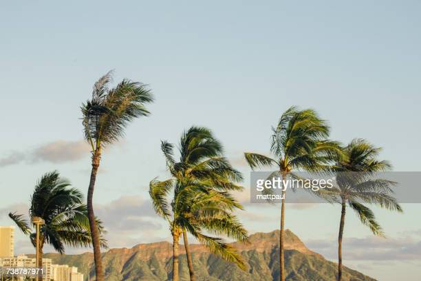 palm trees and diamond head crater, waikiki beach, hawaii, america, usa - waikiki stock pictures, royalty-free photos & images