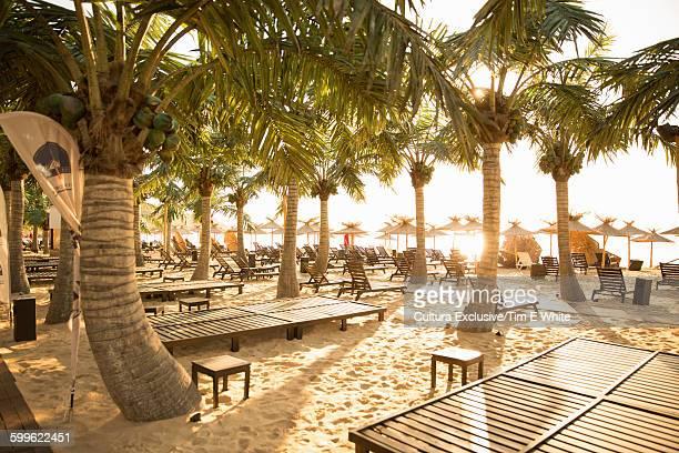 Palm trees and empty sun loungers on beach, Varna, Bulgaria