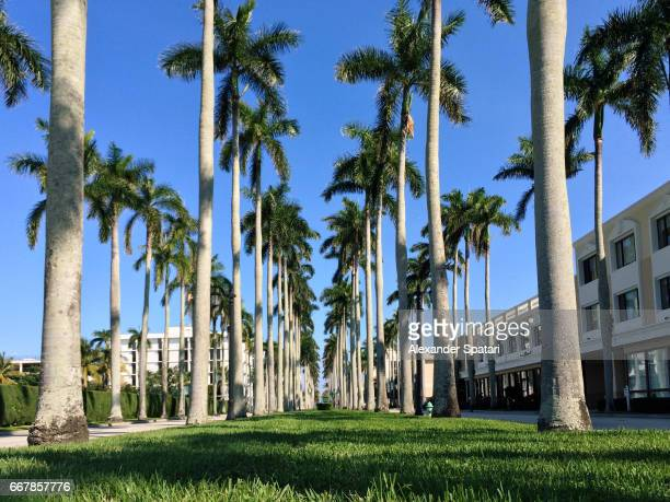 Palm trees and green lawn in West Palm Beach downtown, Florida, USA