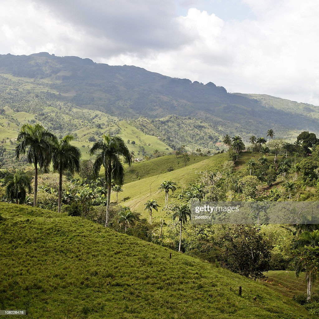 Palm Trees and Hills : Stock Photo