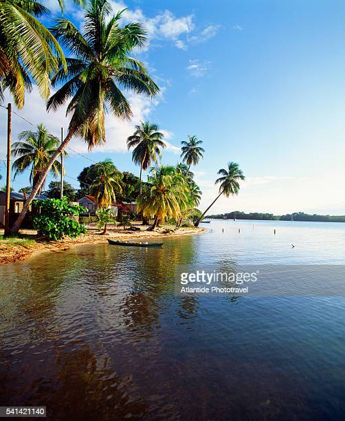 Palm trees and houses in Plasencia, Belize