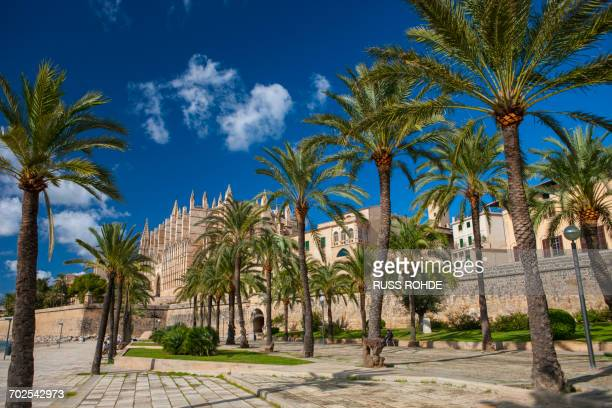 palm trees and la seu cathedral, palma de mallorca, majorca, spain - palma de mallorca bildbanksfoton och bilder