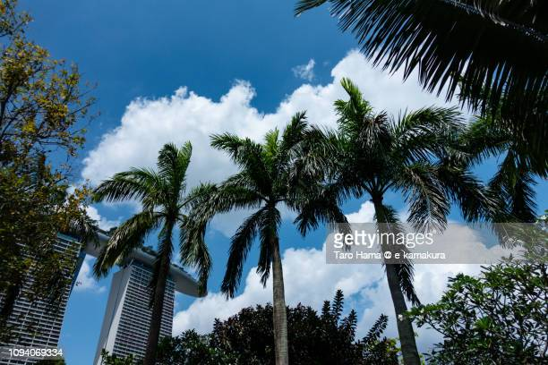 Palm trees and Marina Bay Sands in Singapore