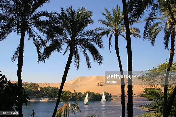 Palm trees and sail boats on the River Nile, Aswan, Egypt