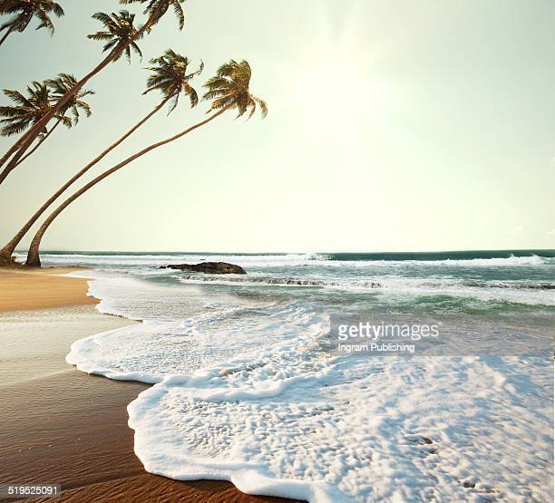 Palm trees and sea surf at beach