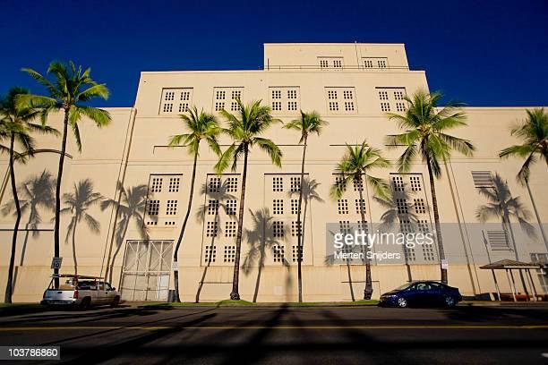 palm trees and shadows on ala moana boulevard. - merten snijders stockfoto's en -beelden