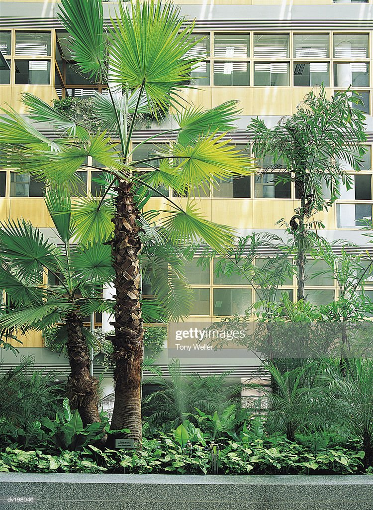 Palm trees and shrubbery outside building windows : Stock Photo