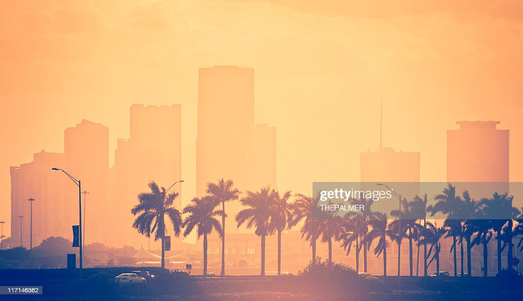 palm trees and skyline in miami : Stock Photo