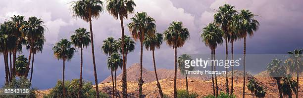 Palm trees and storm clouds