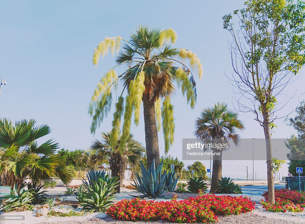 Palm trees and succulents arrangement in Cannes : Stock Photo