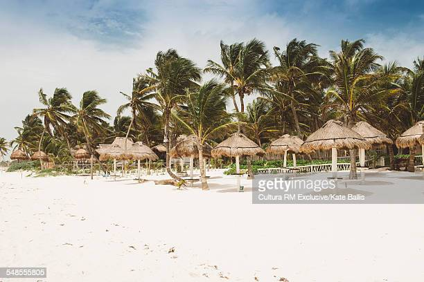 Palm trees and sun shades on beach, Tulum, Mexico