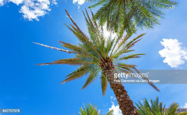 Palm trees and the bright sun in a summer day, Florida, USA