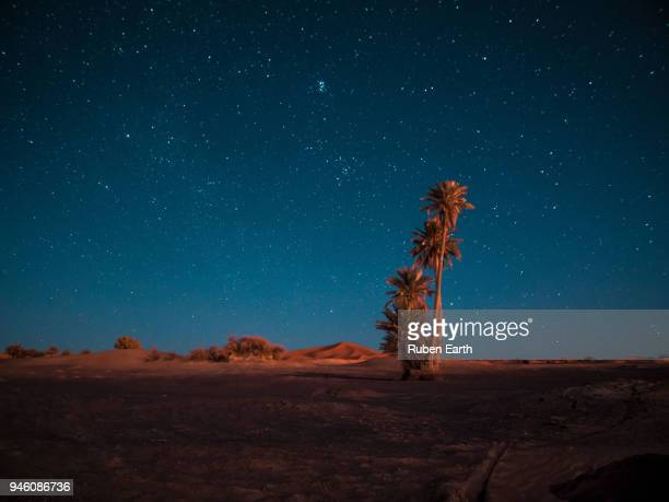 palm trees and the sahara desert sand dunes at night - merzouga stock pictures, royalty-free photos & images