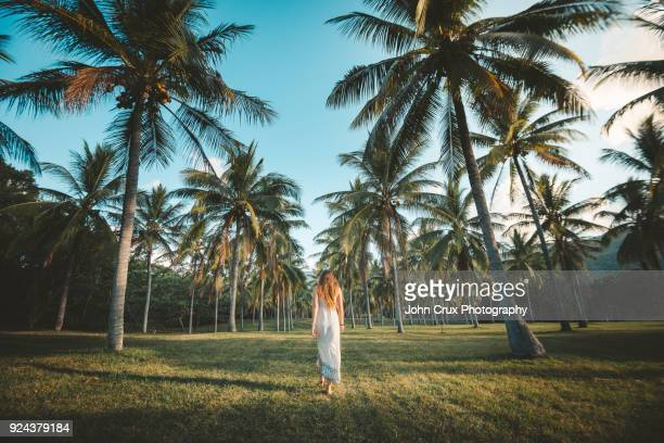palm trees and tourist - cairns stock photos and pictures