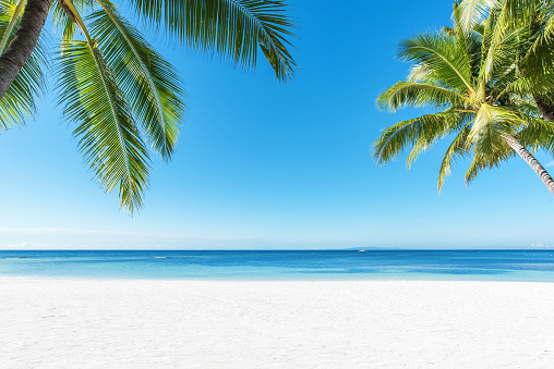 Palm trees and tropical beach background 865600518