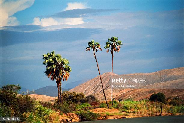 Palm trees and vegetation near the Kunene River on the border with Angola Kunene Region Namibia