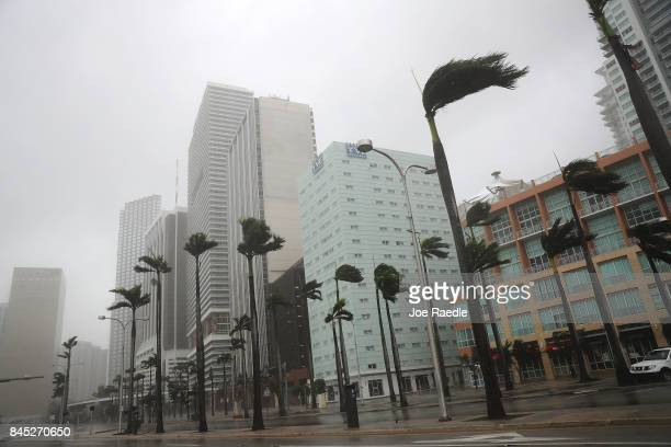 Palm trees are blown around in the high winds from Hurricane Irma on September 10 2017 in Miami Florida Hurricane Irma made landfall in the Florida...