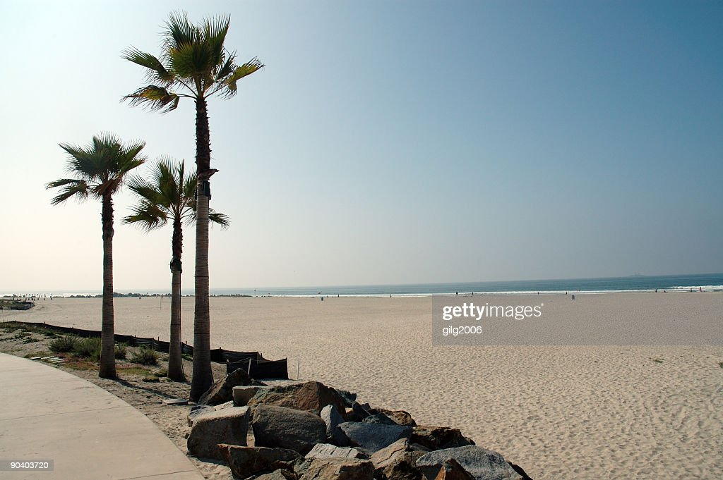 Palm Trees At An Empty California Beach Stock Photo