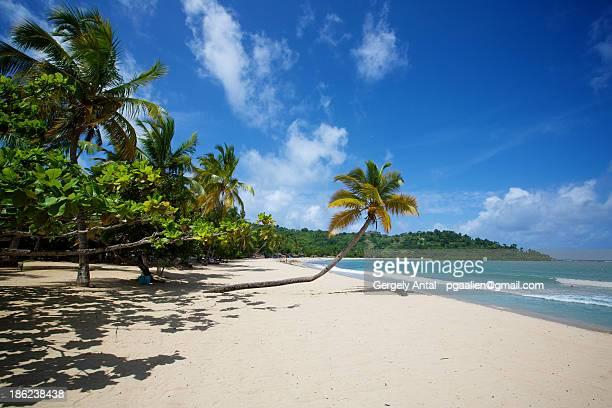 Palm trees at Andilana Beach