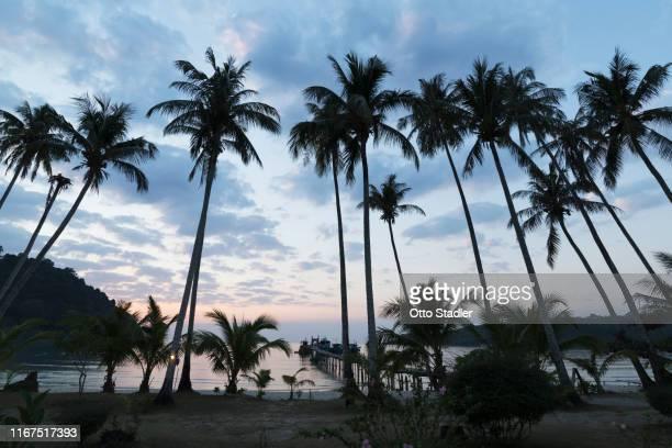 palm trees at bang bao beach at night on ko kut island - golf von thailand stock-fotos und bilder
