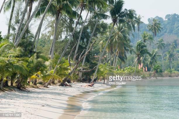palm trees at bang bao beach on ko kut island - golf von thailand stock-fotos und bilder