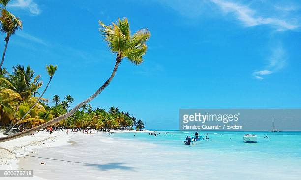 palm trees at beach against blue sky - dominican republic stock photos and pictures