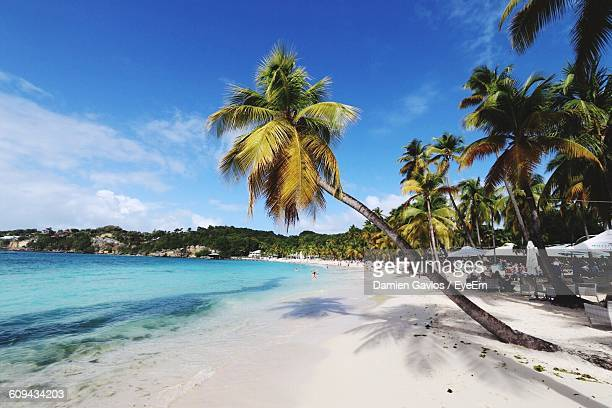 Palm Trees At Beach Against Blue Sky