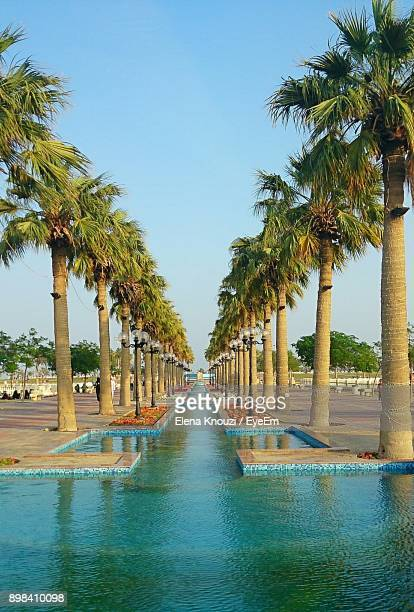 palm trees at beach against clear blue sky - elena knouzi stock pictures, royalty-free photos & images
