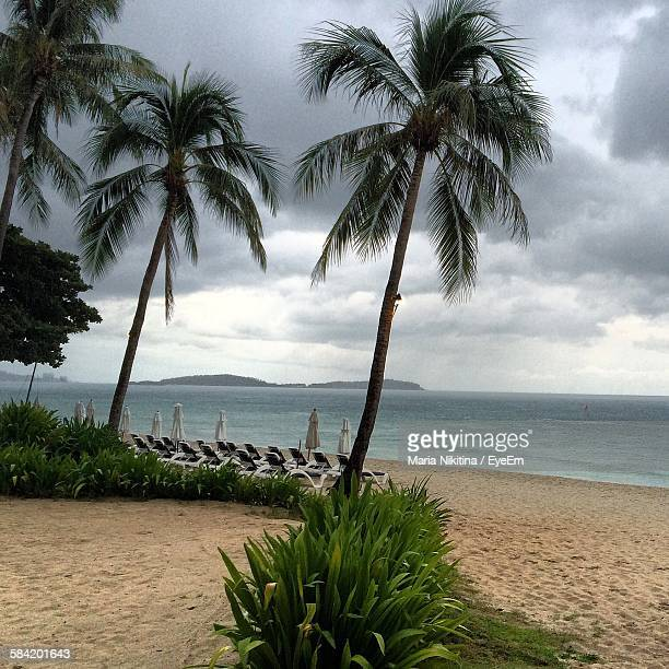 palm trees at beach against cloudy sky - nikitina stock pictures, royalty-free photos & images