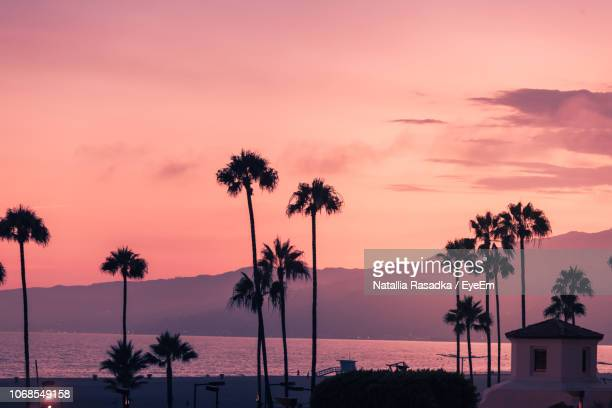 palm trees at beach against sky at sunset - santa monica stock pictures, royalty-free photos & images