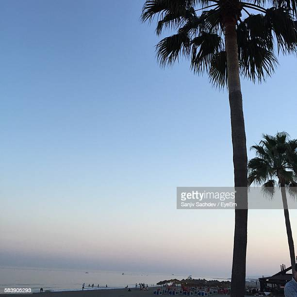 Palm Trees At Beach Against Sky At Sunset