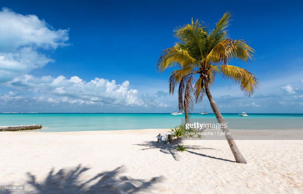 Palm Trees At Beach Against Sky On Sunny Day : Stock Photo