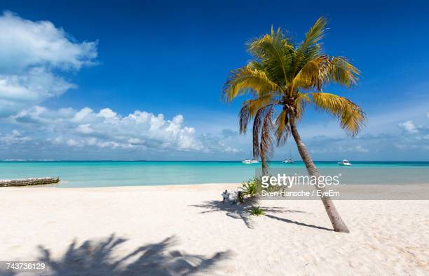palm trees at beach against sky on sunny day - isla mujeres stock photos and pictures