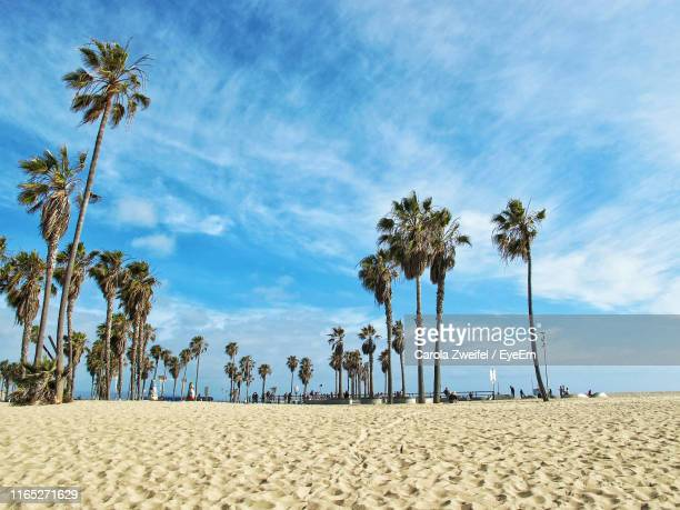 palm trees at beach against sky - california beach stock pictures, royalty-free photos & images