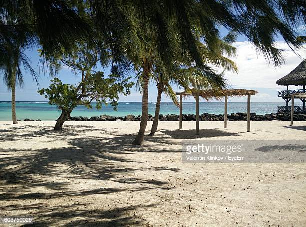Palm Trees At Beach On Sunny Day