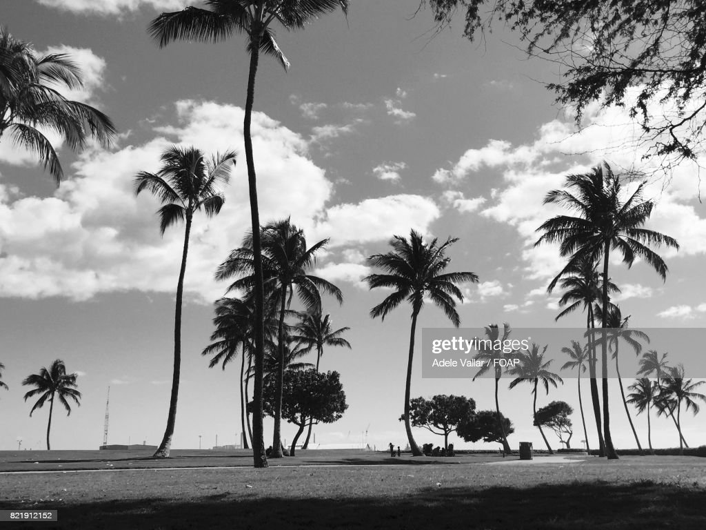 Palm trees at beach : Stock Photo