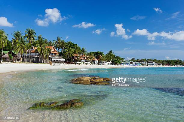palm trees at chaweng beach - ko samui stock photos and pictures