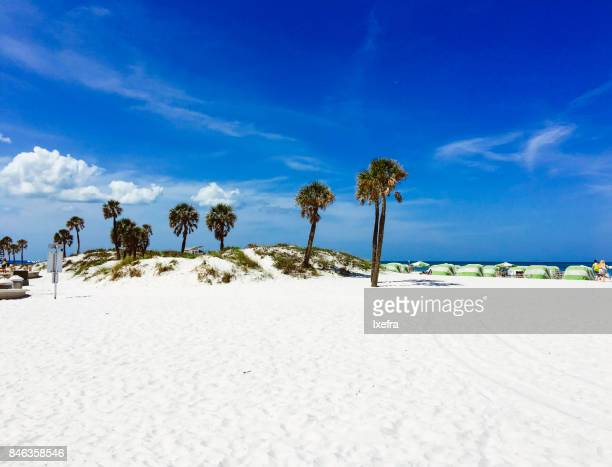 Palm trees at Clearwater beach, Tampa, Florida