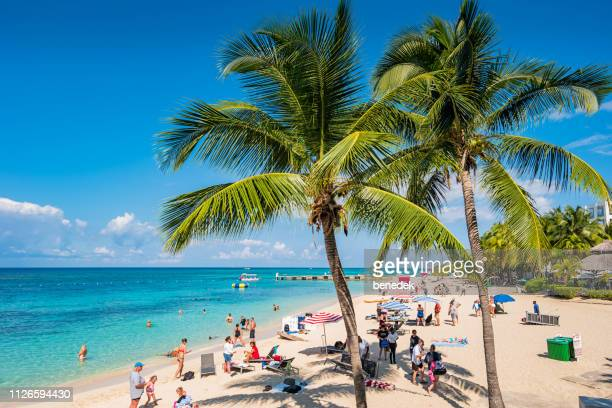 palm trees at doctor's cave beach in montego bay jamaica - montego bay stock pictures, royalty-free photos & images