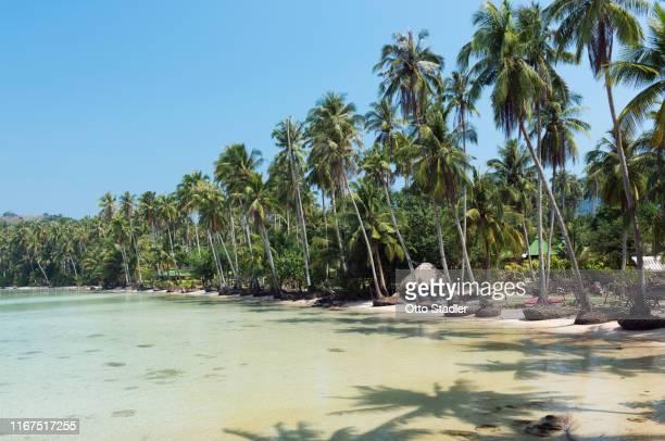 palm trees at klong chao beach on ko kut island - golf von thailand stock-fotos und bilder