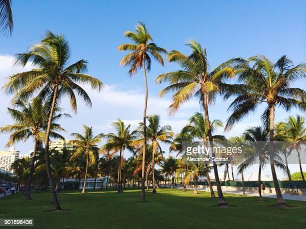 Palm trees at Lummus Park along South Beach coast, Miami, USA