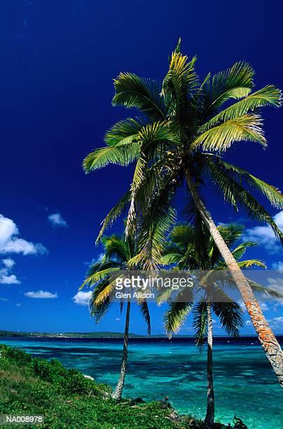 Palm Trees at New Caledonia