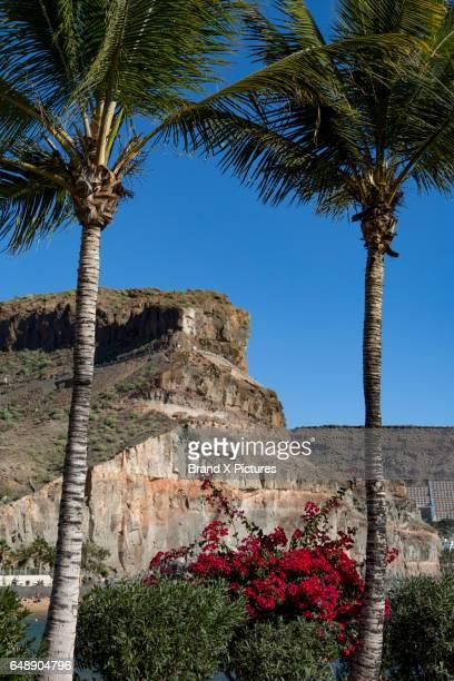 Palm trees at Puerto de Mogan