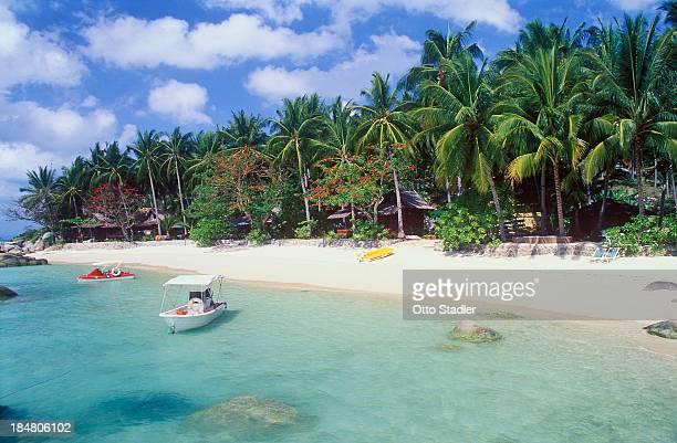 Palm trees at sandy Laem Set Beach